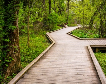 Boardwalk trail through the forest at Wildwood Park, Harrisburg, Pennsylvania - Landscape Photography Fine Art Print or Wrapped Canvas