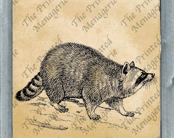 Raccoon Digital Download for collages fabric iron on T-shirt transfer burlap pillows DIY Vintage image Instant printable Raccoon Clip Art