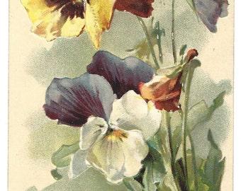 Vintage Postcard - Catherine Klein - Pansies - Number 119