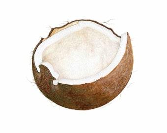 Coconut Art // Food Illustration // Archival Art Print