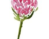 pink protea - Watercolor,...