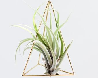 The Prism | Brass Air Plant Holder, Modern Minimalist Geometric Hanging Ornament, Desk Ornament, Centerpiece
