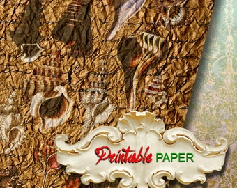 SHELL - Printable wrapping paper Sheet for Scrapbooking, Creat - Download and Print