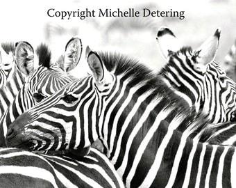 Zebra Stripes - Digital Photography - Zebra Art, Zebra Photography, Africa, Zebra Wall Art, Zebra Decor, Wildlife Photography, Safari Art