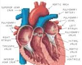 Human Heart Anatomy Cross Stitch PATTERN