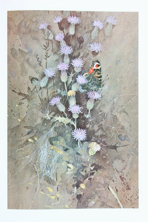 Vintage Butterfly Print  Peacock on Purple Thistles by Richard    Vintage Butterfly Print