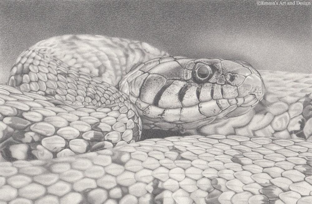 Realistic cobra drawing