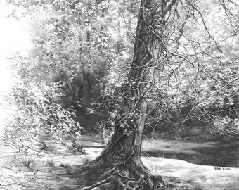 Fairytale tree ORIGINAL DRAWING by Katarzyna Kmiecik / original pencil landscape, original tree drawing, sunny forest, realistic tree, trees