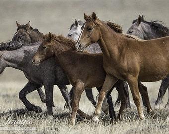 Wild Mares and Foal Run - Fine Art Wild Horse Photograph - Wild Horse - Adobe Town