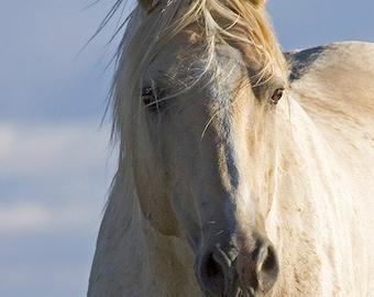 Cloud's Summer Portrait - Fine Art Wild Horse Photograph - Wild Horse - Pryor Mountains - Cloud