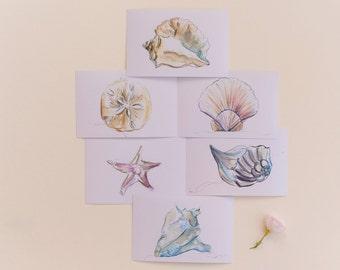 Seashells Print Set, Set of 6 Beach Seashell Prints