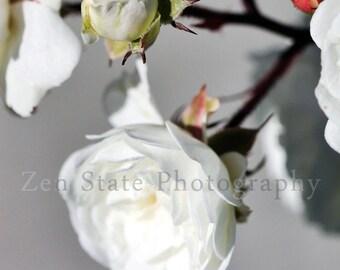Rose Art. White Rose Flower Photography. Still Life Flower Photo. White Flower Blossom Wall Art. Framed, Unframed or Canvas Prints.