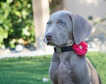 Pet accessories, Dog collar accessories, girl dog accessories, girl dog collar, Wedding Dog Flower, Bow for Dogs, Dog Bow, dog collar flower