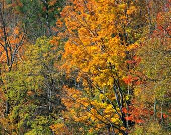 Winding Fence in Autumn, Original Nature Art Photo Print