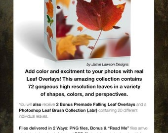 Leaf Overlay Collection for Photography Editing + Bonus!