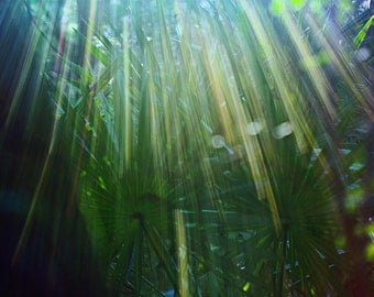 Nature Photography, Sun through the Trees - Ray of Hope, Green, Sun Flare, Tranquil