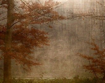Fog, Fine Art Photography, Autumn, Winter, Nature, Trees, Forest, Skeeter, Landscape, hologram,  Sandra Röken, leaves, wall decor, wall art