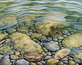 Rockpool Treasure. 2 sizes, signed and numbered Lithographic print. Beach, Seascape, Shells and Wildlife. Originals. Prints and cards.