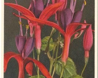 Fuchsia,  ca. 1940 Unused Vintage Postcard, Thor E. Gyger, Switzerland  #59