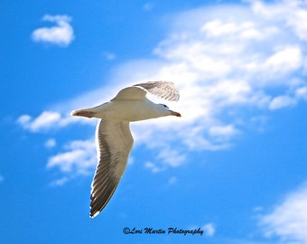 Angelic Seagull.