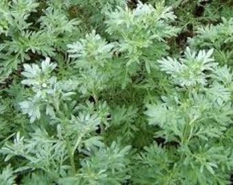 Wormwood Seeds, Artemisia Absinthium, Medicinal Herb, Absinthe Plant,  Mugwort, Perennial Herb