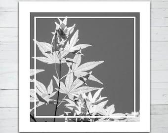 Photo print - Leaves