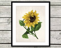 sunflower art sunflower decor sunflower gift sunflower wall art sunflower botanical print sunflower print kitchen decor sunflower wall decor