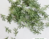 Evergreen Branch Confetti  - Scrapbook Embellishment, Table Decoration, Card Making, Tag Making