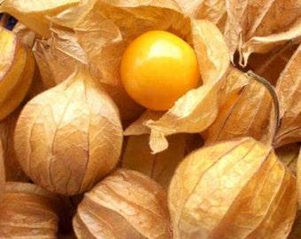 Physalis Peruviana - 100 Seeds - Cape Gooseberry Chinese Lantern