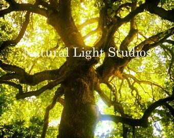 Digital Photo Download - Under The Oak Tree