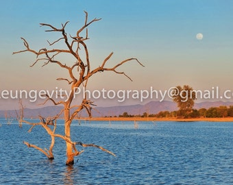 Moonrise and a Tree, Limited Edition