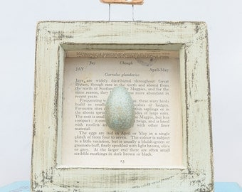 Hand painted Jay egg in a pale green aged box frame.