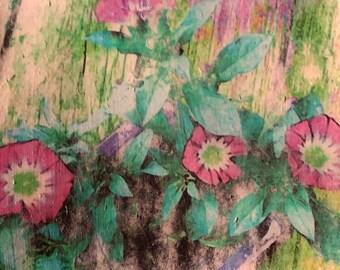 Colorful Floral Wall Art, Convolvulus, Lilac, Original Photo Transfer, Size 7.5 x 8.5
