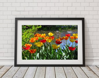 Tulips Photography - Spring Flower Photo - Yellow and Red Wall Decor - Tulip Wall Art - Nature Photography - Floral Print - 8x10