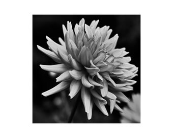 Black and White, Flower, Photograph,Wall Art, Print