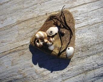AtlanticOceanArt Driftwood Art from Maine Beach with Shells SeaGlass Pebbles Sand Dollars