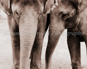 elephant photo photography