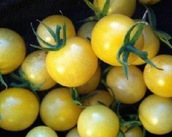 Lollipop Tomato seeds