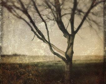 Tree, Dreaming