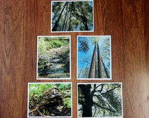 Nature Photography Note Cards - Set of 5 note cards with envelopes