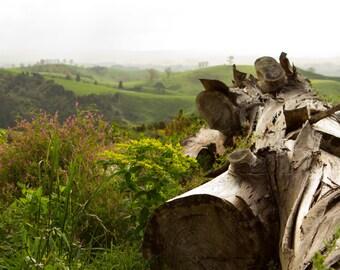 Felled Tree Photography, Vista, Landscape, New Zealand, Green, Trees, Hills