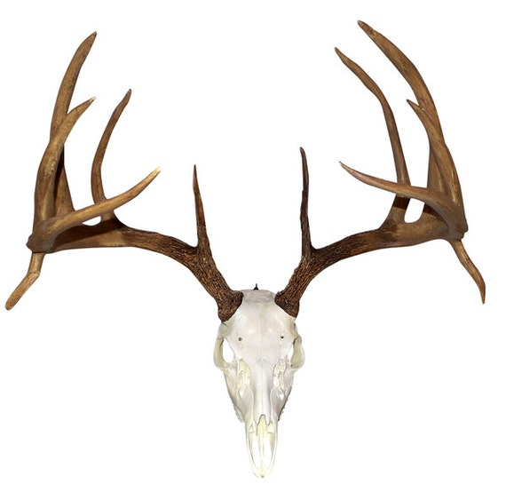 how to make replica deer antlers