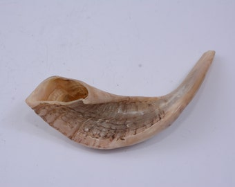 Rams Horn Shofar  Kosher  Polished Made in Israel  best sound best price best quality