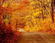 "Fall foliage and dirt road, Fall scene photo, Fall in New England, for nature lovers  Title: ""Autumn's Brilliance"""