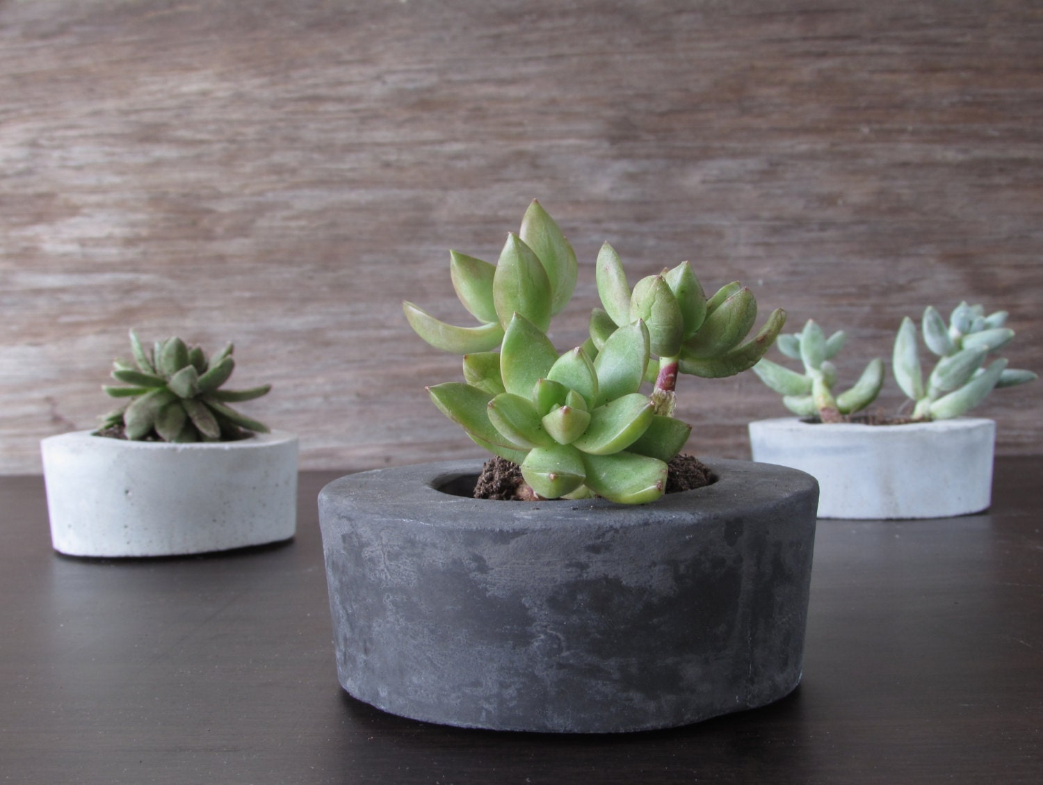 Mini Concrete Planters : Mini concrete planters succulent containers by badseedshop