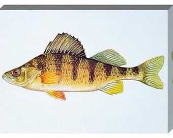 Vintage Yellow Perch Fish Canvas Print