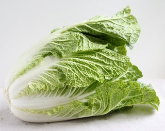 CABBAGE (Chinese Napa) VEGETABLE *20 Seeds*  Super Easy To Grow, Fresh Seed, High Quality - High Germination, Vegetable Garden
