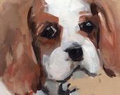 Dog Art Print Spaniel Portrait - Cavalier King Charles Spaniel by David Lloyd