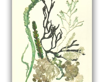 Seaweed art,  MADE TO ORDER, Natural pressed seaweed,  Botanical seaweed artwork, beach cottage decor, Victorian art, sea weed pressing