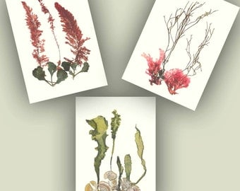 Seaweed art, Pressed seaweed, 3 collage seaweed pressings,pressed seaweeds botanicals, Botanical seaweed, beach cottage, nautical decor, 5X7